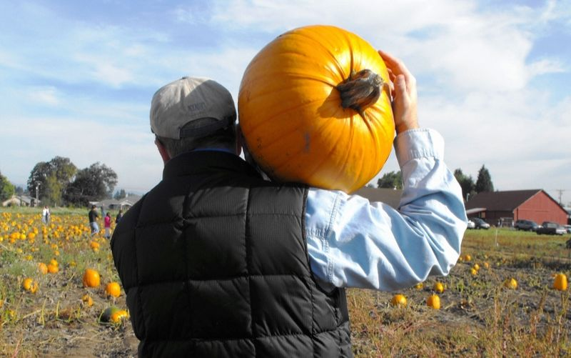 Pumpkin carry